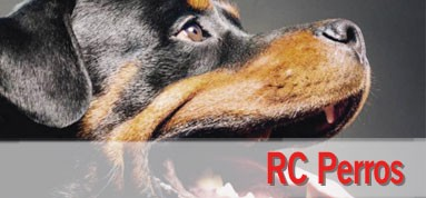 RC Perros